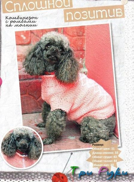 Как вязать для собак (1)