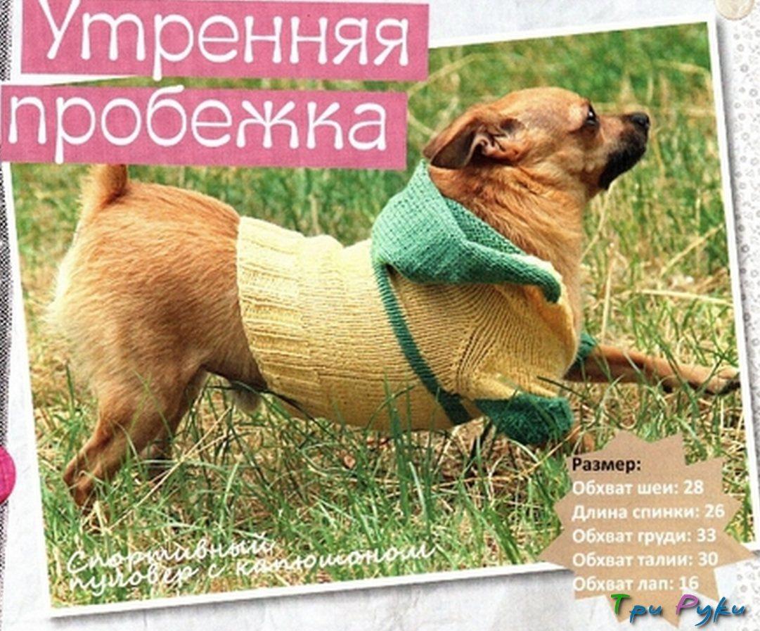 вязание для собак для начинающих (1)
