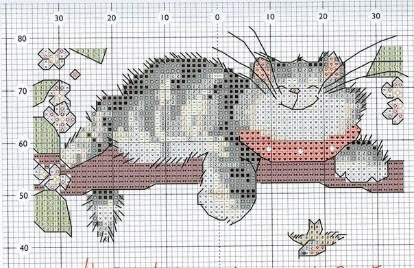 котята схема